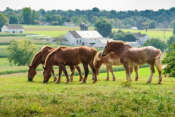 Amish Farm   Snake Hill Road, Lancaster, PA