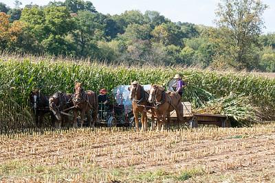 Corn Harvest  Mondale Road Lancaster, PA