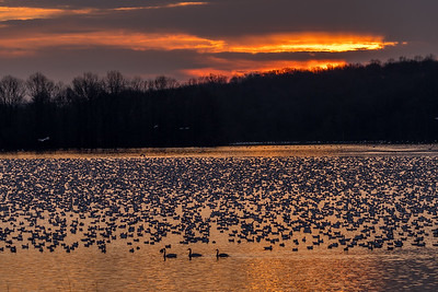 Sunrise at Willow Point  Middle Creek Wildlife Management Area Stevens, PA