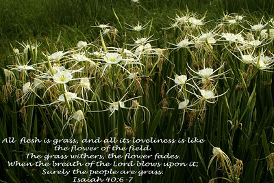 Isaiah 40:6-7