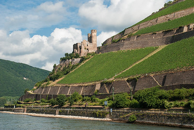 Ehrenfels Castle rises above the Rhine River  Germany