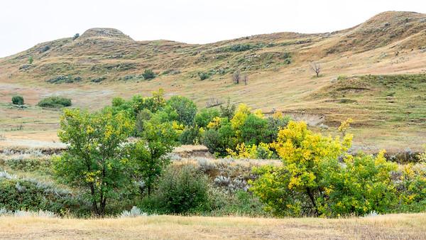 Teddy Roosevelt National Park  Medora, North Dakota