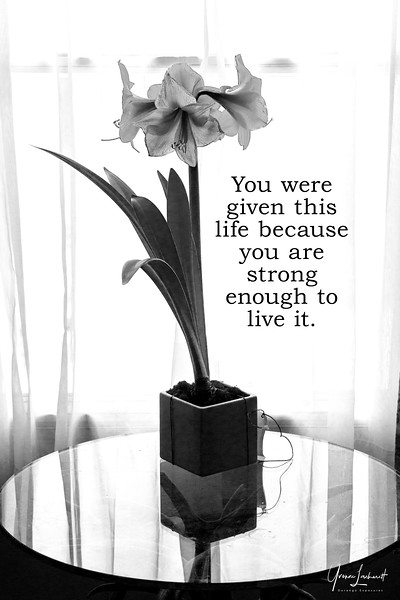 You were given this Life