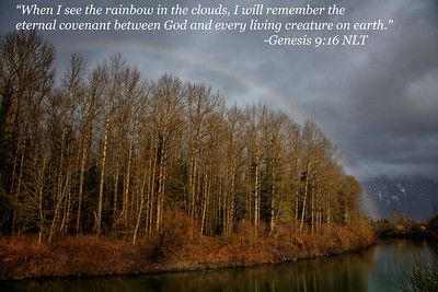 Rainbow Winter Trees - Genesis Quote