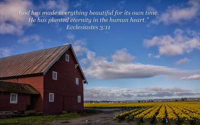 Everything is Beautiful Daffodil Barn