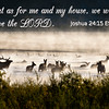 for as me and my house we will serve the lord on Elk in the Mist