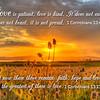Love is patient 1 Corinthians 13 NIV on sunset thistle