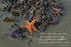 starfish 291 ins
