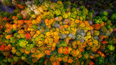 Sacred Grove From On High