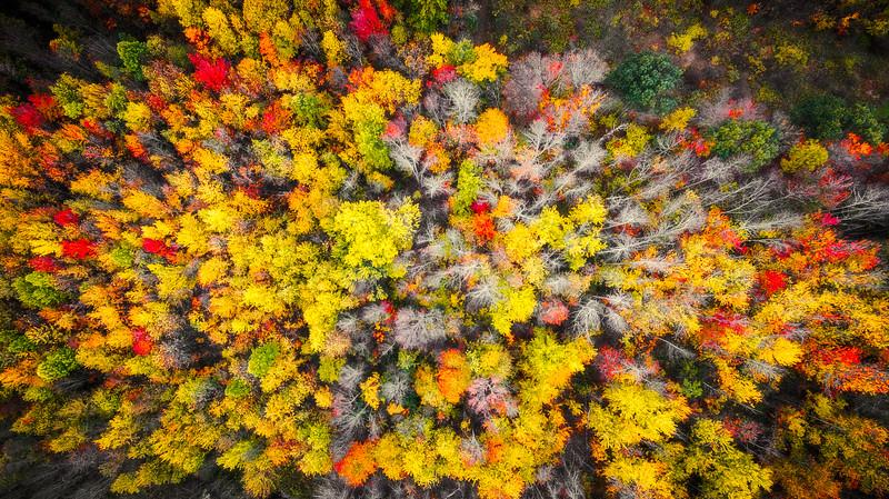 Autumn From Heaven