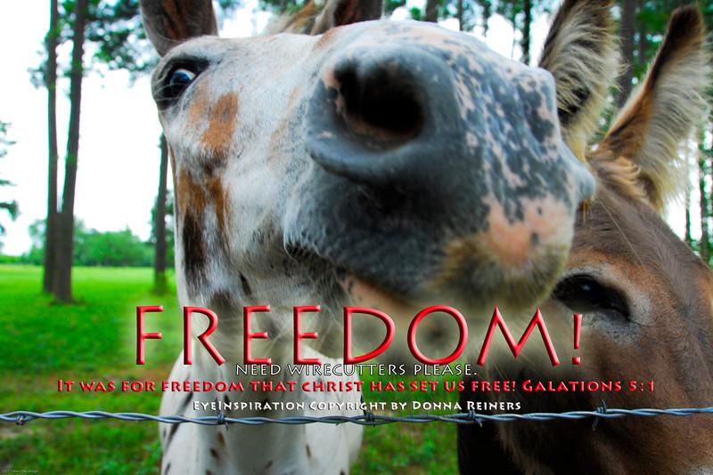20070703-NDI11134 Freedom