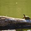 A Turtle Sunbathing