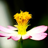 Wild Flower in Focus