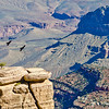 Wildlife and Cliffs at Grand Canyon