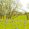 Ennis Texas Bluebonnet Trail