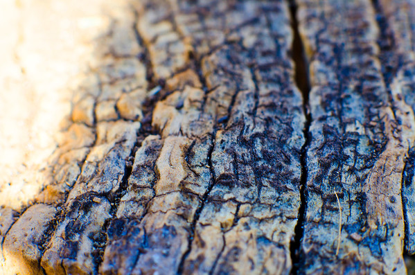 Wood in Focus