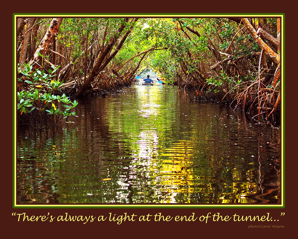 Mangrove Tunnel Kayak