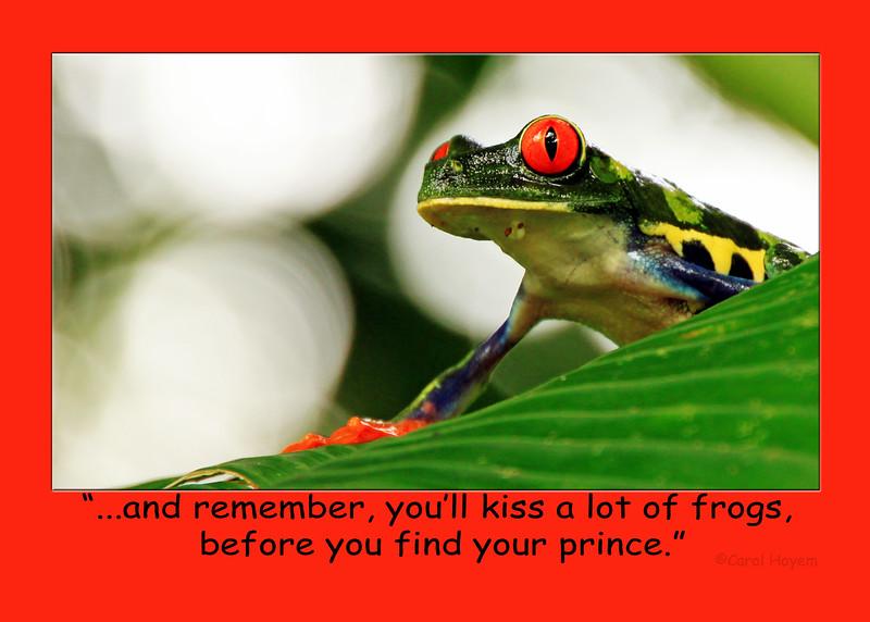 Tree Frog Kiss
