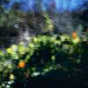 Nature's Monet