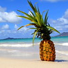 Aloha Pine