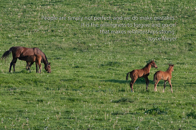 Paris, Kathy Maybee at White Hall Farm, half sister to Canadian Ch. filly Inglorious dam is Noble Strike) on paint nurse mare, More than Ready-MalibarStar2012colt, stuck across the stream, Harlan's Holiday colt, Notional Colt, Unbridled Song mare with whit