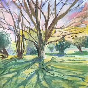 Tree in Edmonds Park. Pastel on paper.