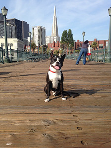 Harley on Pier 7
