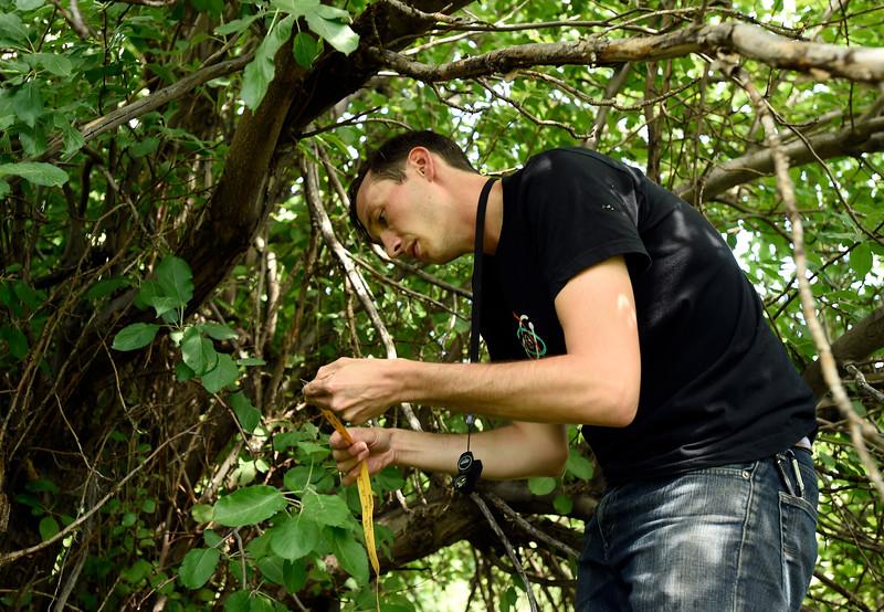 Apple Tree Study