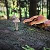 forest in Nordrhein-Westfalen, Germany
