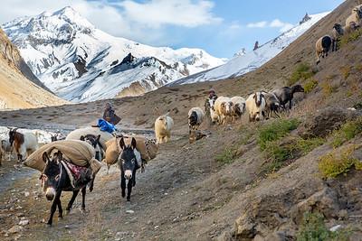 Ladakh2018_DP8C8270