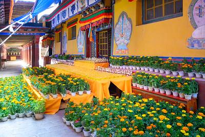 Tibet2019_DSC_0185