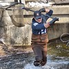[Jack Haley/Messenger Post Media]<br /> Dan Mulhall of the DEC wrestled out a nice rainbow trout from under the Route 245 bridge that goes over Naples Creek.