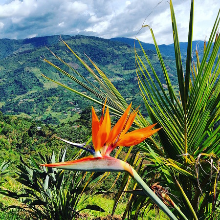 Colombia flower mountain