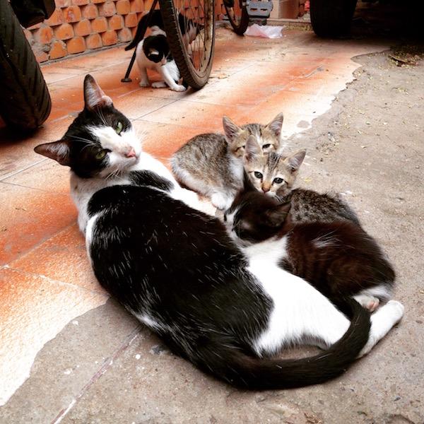 Cats playing taken on India trip