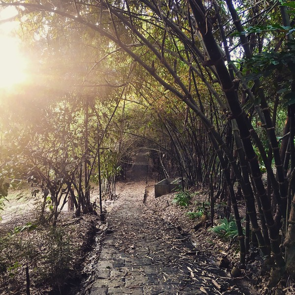 bamboo path at GK Enchanted Farm