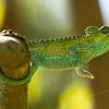 Chameleon Stretching