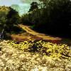 Buttercup Lane