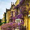Bath Priory - the wisteria