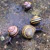 Snail dance