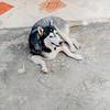 Wildlife photography animal photos