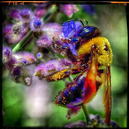 Big Bee