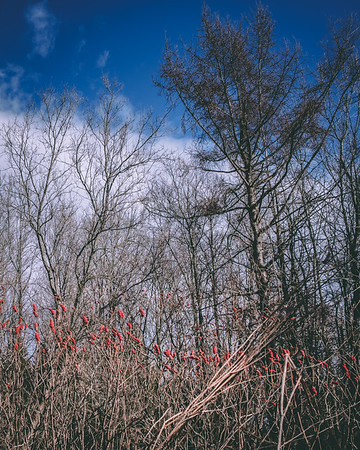 18Apr30-gatineau_park-177