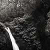 Old growth rainforest waterfall