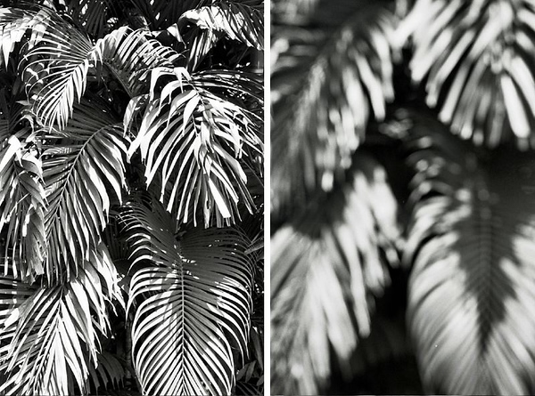 Adox Silvermax 100 Review