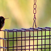 All About That Hummingbird Bass