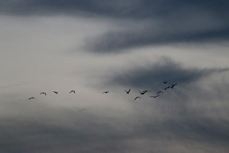 Oiseaux de Nuit