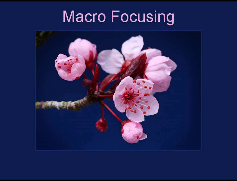 """<H2>Macro Focusing Video</H2> <span style=""""color: #cc5f29;""""> Click on the thumbnail to launch a video.  Be sure to turn your volume on to enjoy some wonderful music while you learn. </span>   After you are done, check out the links below for information on choosing focus points on common cameras"""