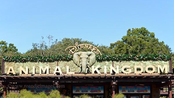 Disney Animal Kingdom, Florida