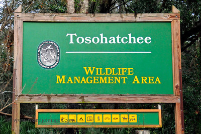 Tosohatchee Wildlife Management Area, Christmas, Florida