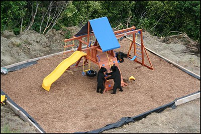 Bears in the Playground